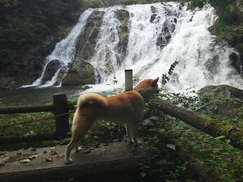 南相木村・犬ころの滝