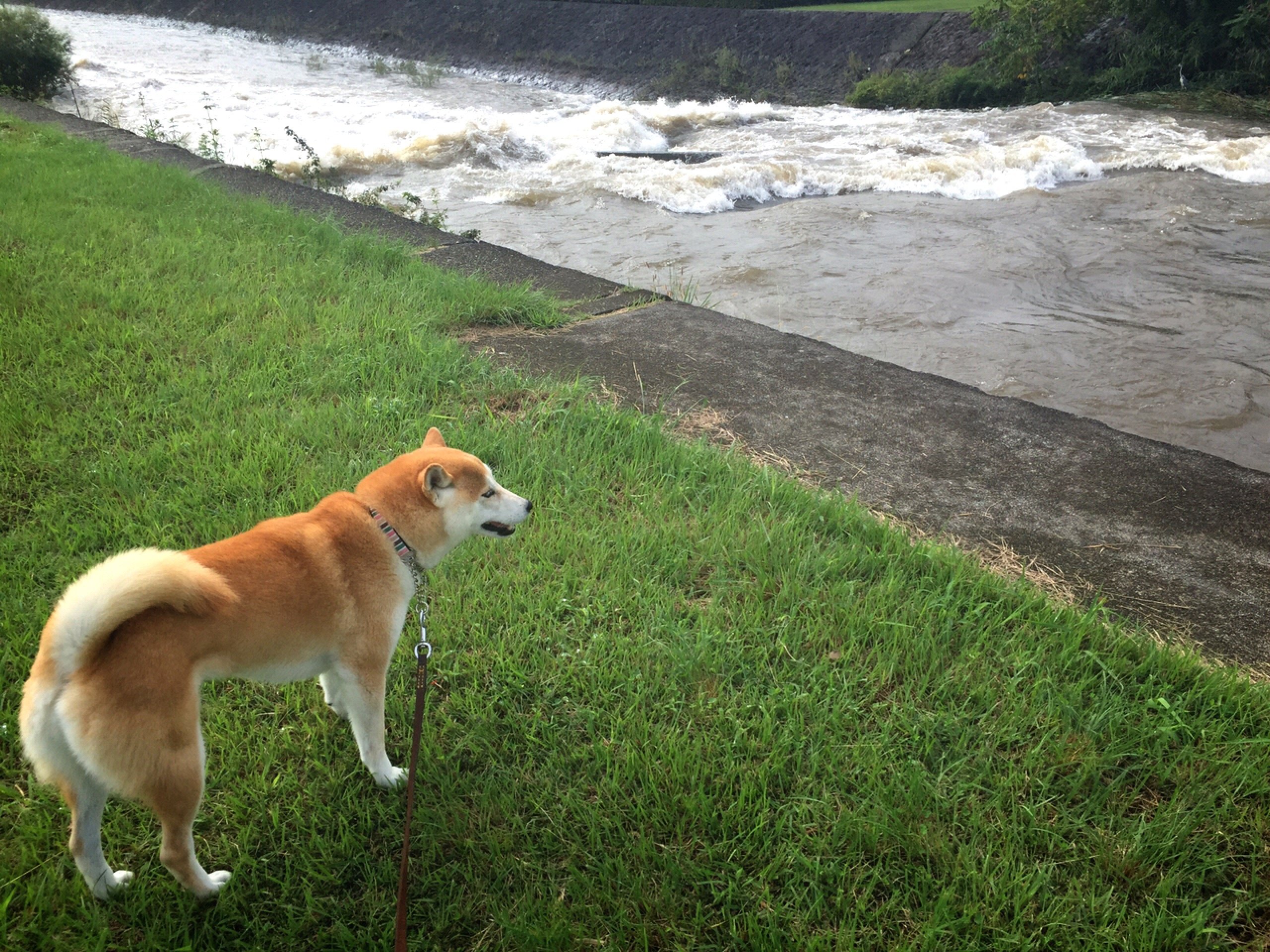 台風が過ぎ去った後の河川敷散歩