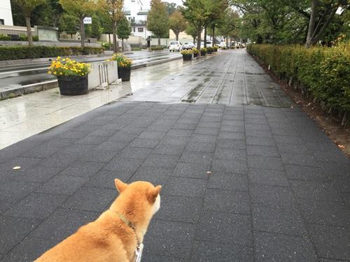 松本城周辺2