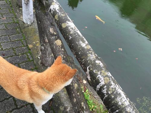 松本城周辺8