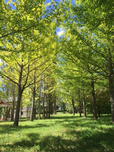大池公園18
