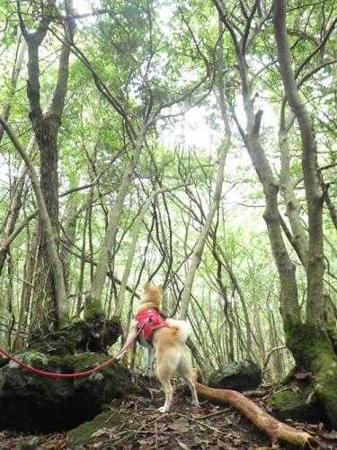 樹海41東海自然歩道