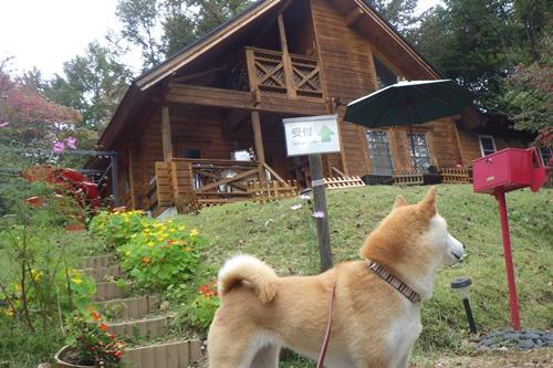 あさまの森キャンプ場15