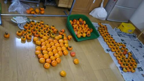 柿に占拠されるキッチン