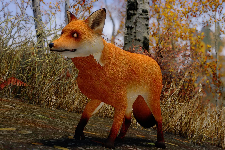 CuteFoxiesSK 010-1 Info Fox Mod 1