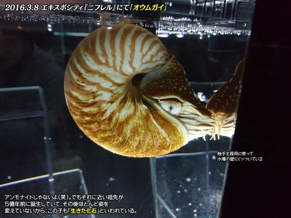 DSC_0283_20161024153606e55.jpg