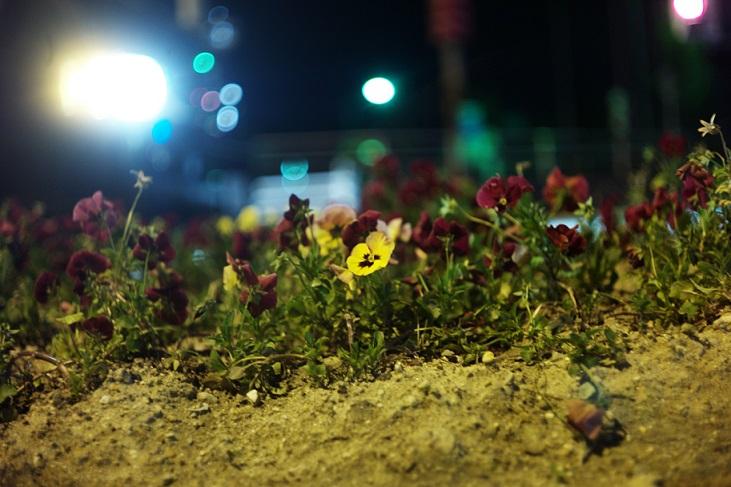 フリー画像街燈と花
