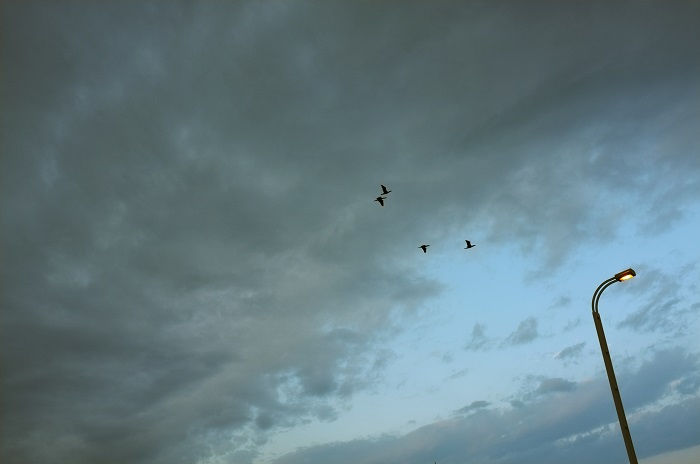 フリー画像曇りの空