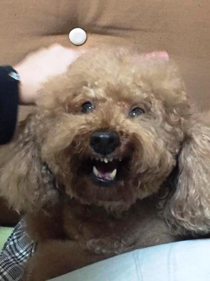 愛犬rossi=ロッシ激怒する( ゚Д゚)ドルァ!!