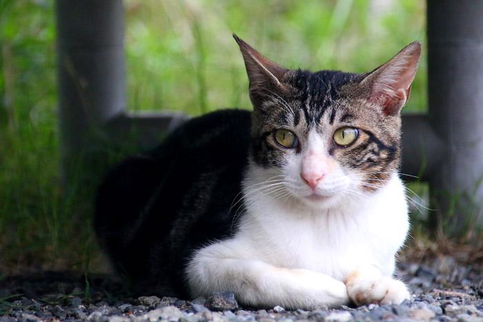 Kitten1607_018c.jpg