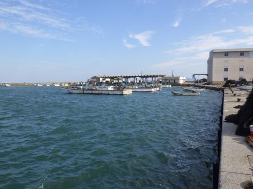 三浦港釣り (14)