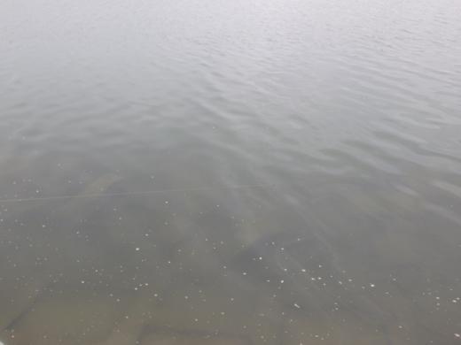 秋ヶ瀬で釣 (25)