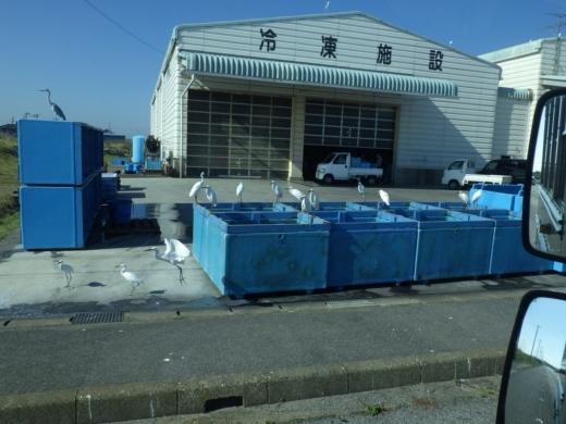 片貝漁港 (3)