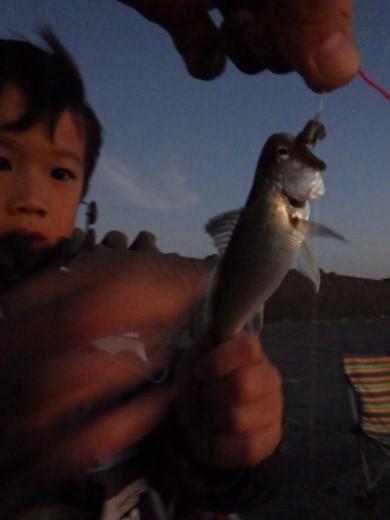 片貝漁港 (43)