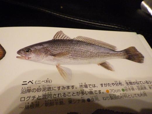 片貝漁港 (55)