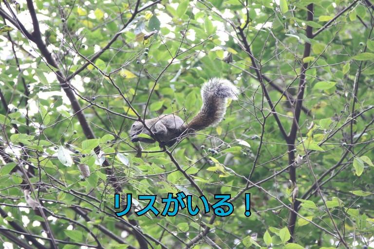 201610240953090fa.jpg