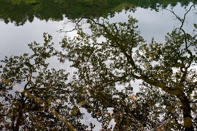 日光白根山 弥陀が池