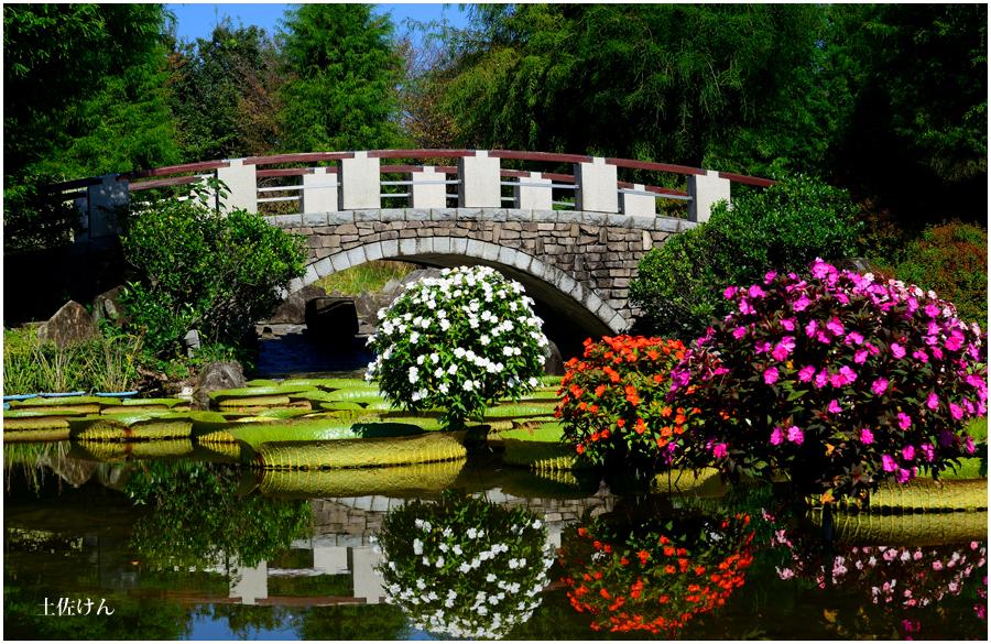 オニバスの池