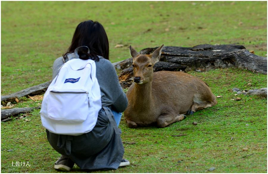 奈良散策3