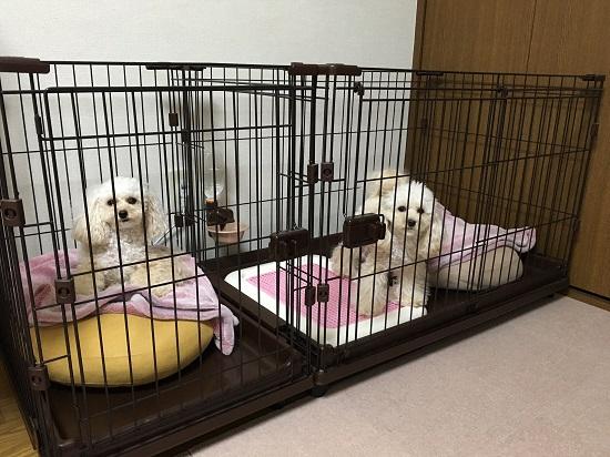 ベッドが秋バージョン 2