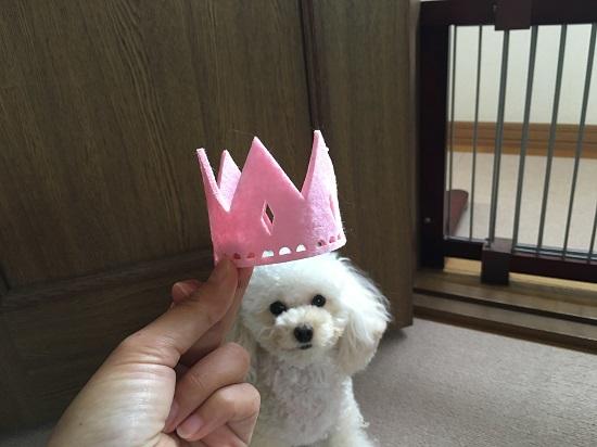 お誕生日の準備 ~ココモコ2歳の前夜祭~1