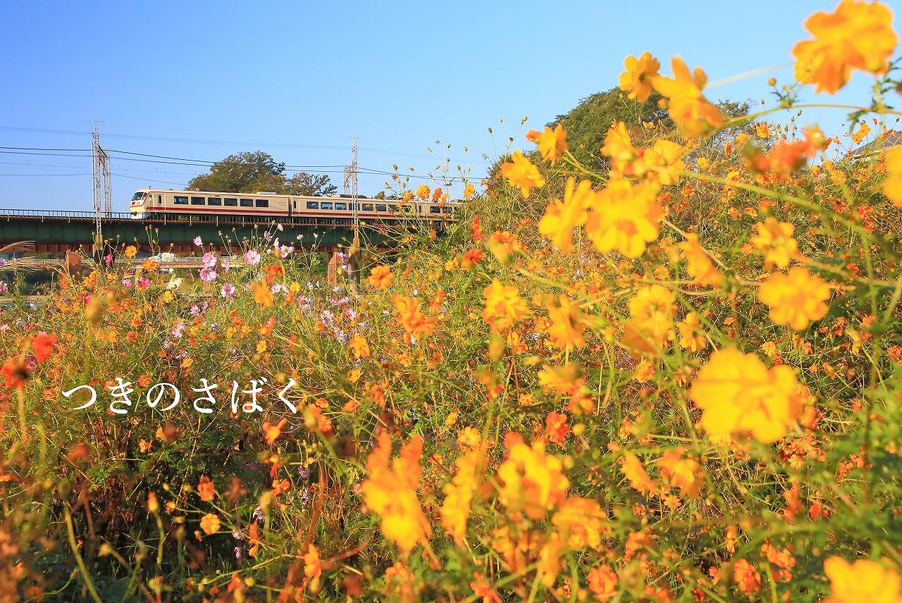 IMG_8921f5500_1.jpg