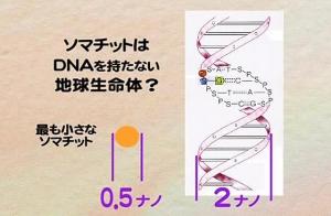 ソマチッド 遺伝子