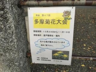 第42回多摩菊花大会_002