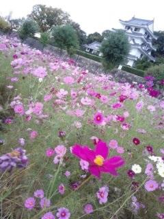 kosumosu20161023.jpg